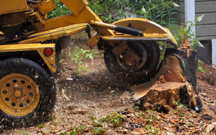 Stump Removal Lancaster